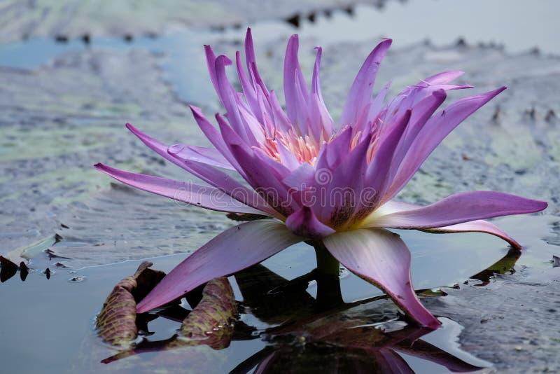 Nette Farbschönheits-Natur Blume lizenzfreie stockbilder