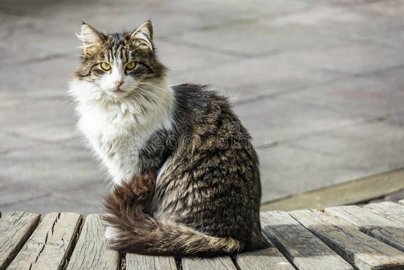 Nette Freundkatzen in der Natur stockbild