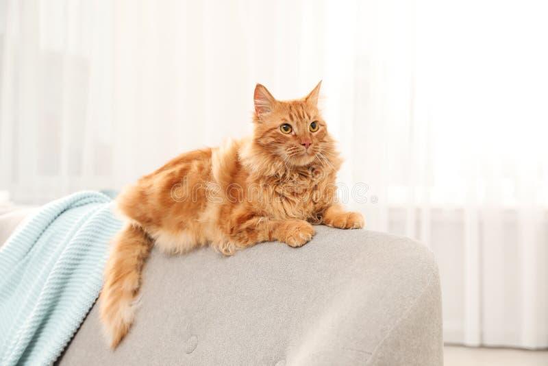 Nette freundliche Katze, die auf Sofa liegt lizenzfreie stockbilder