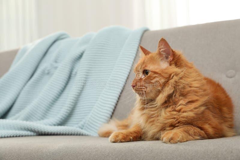 Nette freundliche Katze, die auf Sofa liegt stockfoto