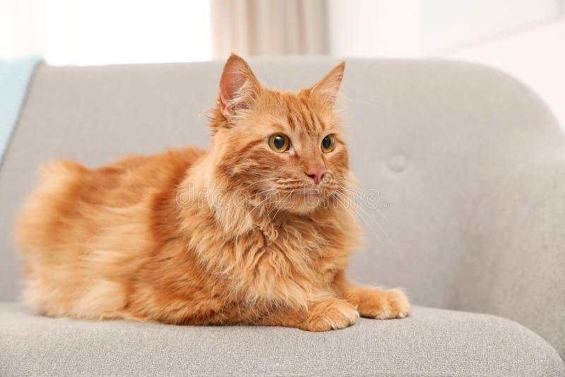 Nette freundliche Katze, die auf Sofa liegt lizenzfreies stockfoto
