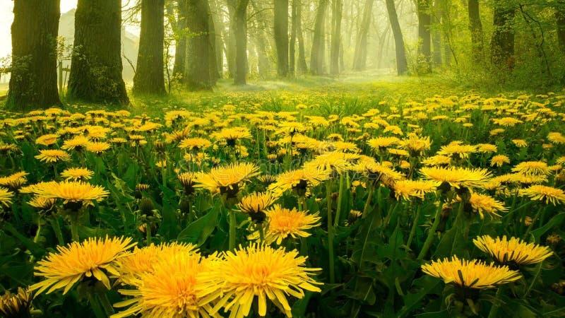 Nette gelbe Blumenfeldfotoaufnahme lizenzfreies stockfoto