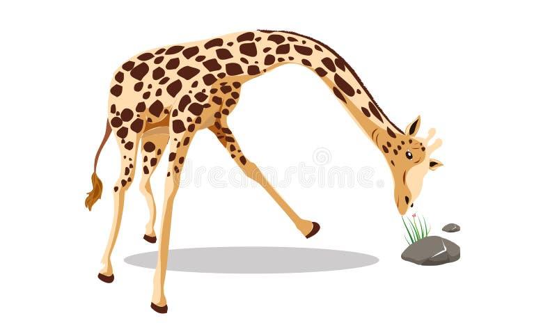 Nette Giraffenvektorillustration lokalisiert auf weißer ENV 2 - Vektor lizenzfreie abbildung