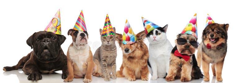 Nette Gruppe von sieben Parteihunden und -katzen stockfotografie