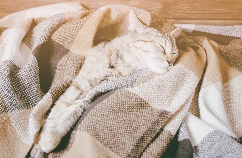 Nette Hauskatze, die unter Plaid schläft lizenzfreie stockfotos