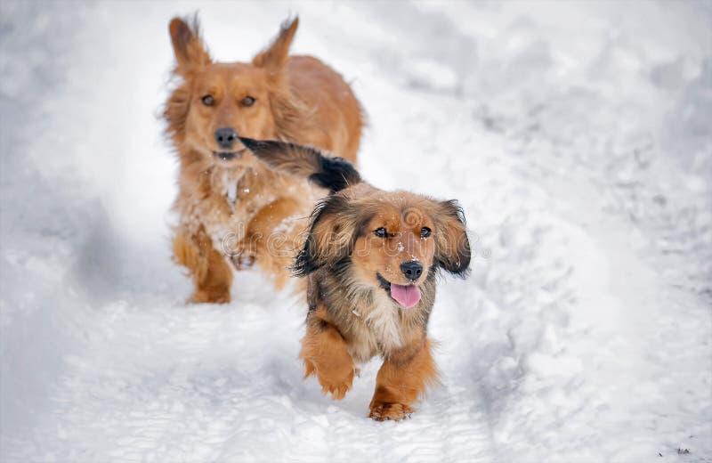 Nette Hunde im Schnee stockfotos