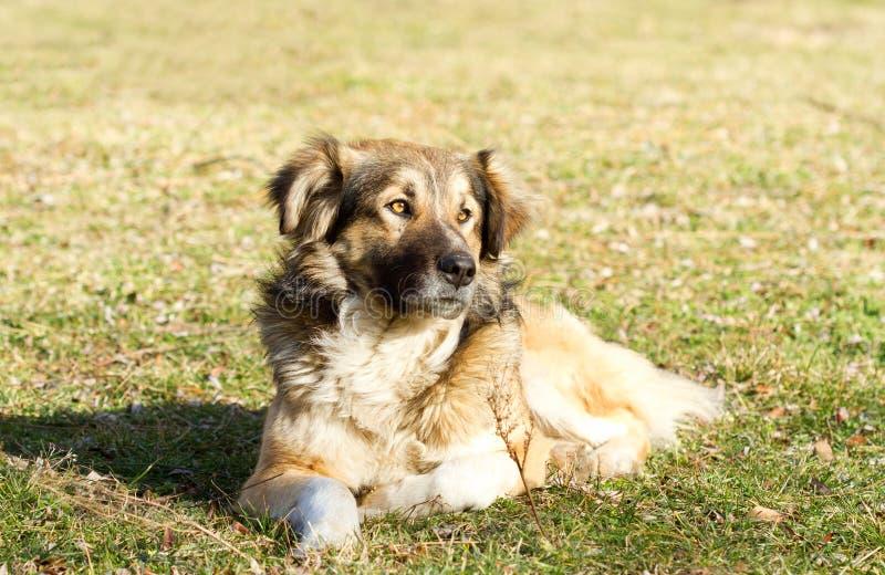 Nette Hundestellung stockbild