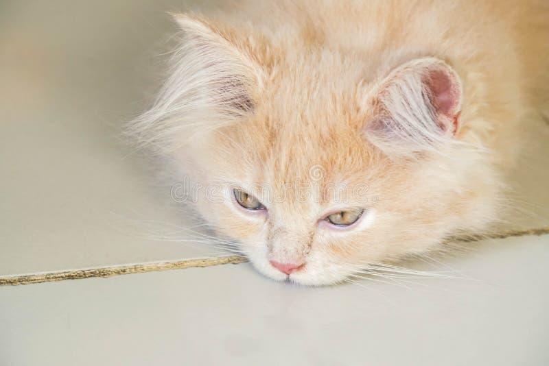 nette junge persische Katze mit dem schläfrigen und gebohrten Gesicht, das auf dem Boden liegt lizenzfreie stockbilder
