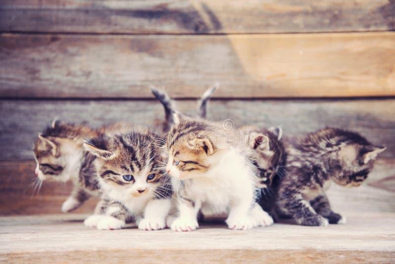 Nette Kätzchen stockbild