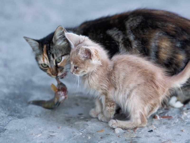 Nette Kätzchen- und Mutterkatze auf konkretem Pier im Seehafen stockbilder