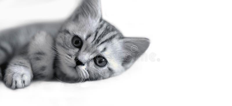 Nette Kätzchenlügen stockbild