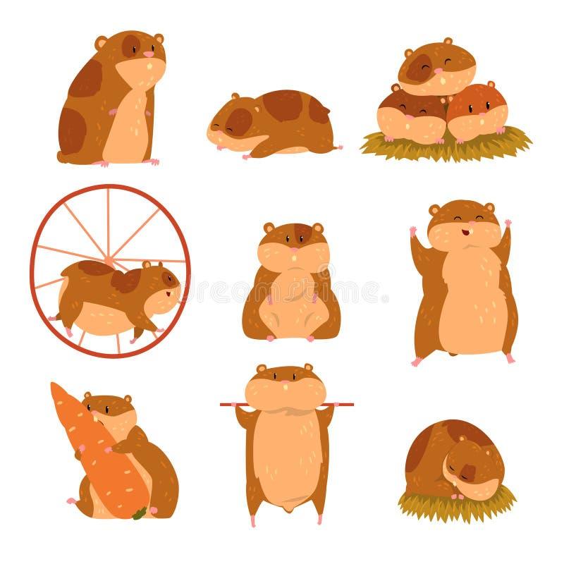 Nette Karikaturhamstercharaktere stellten, lustiges Tier in verschiedenen Situationsvektor Illustrationen ein vektor abbildung