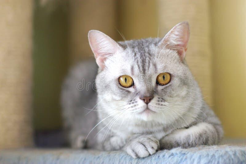 Nette Katze stockfotos