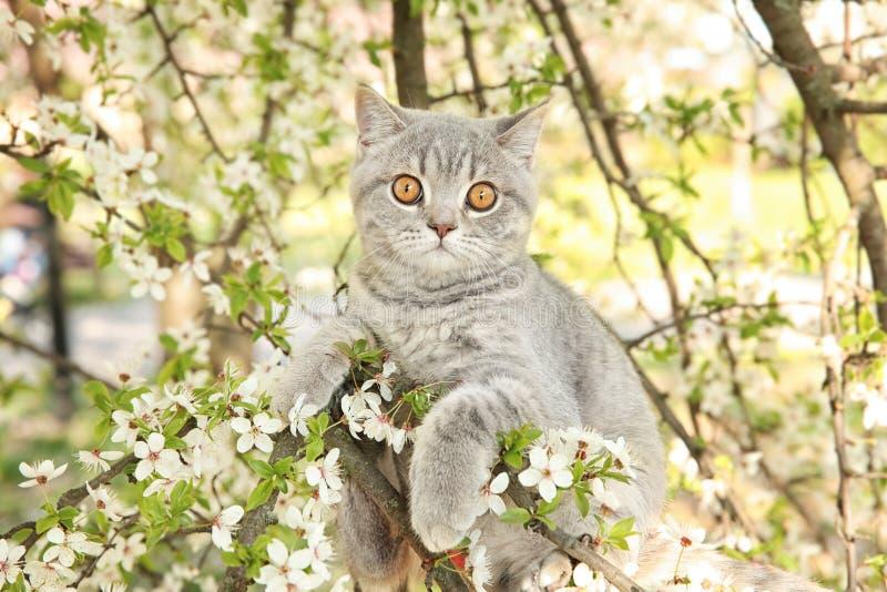 Nette Katze auf blühendem Baum lizenzfreies stockbild
