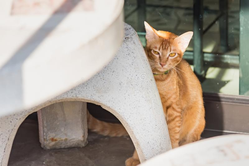 Nette Katze auf der Stra?e thailand lizenzfreie stockfotografie