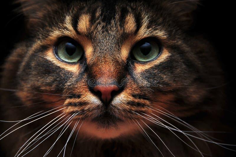 Nette Katze aus den Schatten heraus lizenzfreie stockfotografie