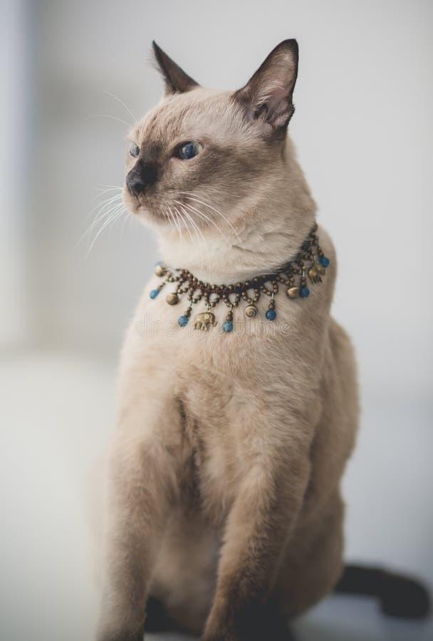 Nette Katze der getigerten Katze zu Hause stockbilder