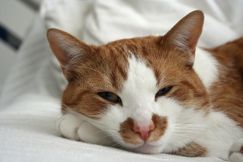 Nette Katze, die auf einem Sofa ein Schläfchen hält lizenzfreie stockfotos