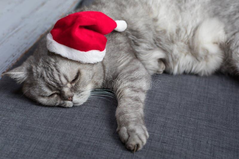 Nette Katze, die auf Sofa mit einer Sankt Hut, Weihnachts-afterparty Konzept, selektiver Fokus stillsteht stockfoto