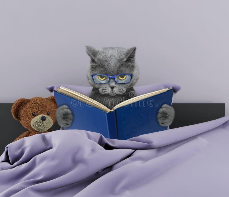 Nette Katze, die ein Buch im Bett liest lizenzfreie stockfotos