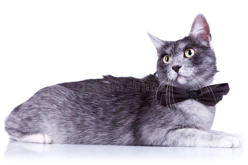 Nette Katze mit großen Augen stockfotos