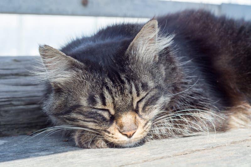 Nette Katze mit Rot, ACloseup-Porträt eines flaumigen netten Katzenschlafen oblack, weiße Farben, die aus den Grund sitzen und si stockbild