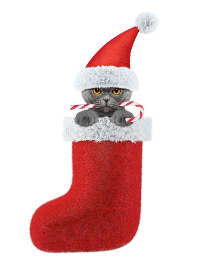 Nette Katze mit Weihnachtssüßigkeit im Strumpf Lokalisiert auf Weiß lizenzfreie stockfotos