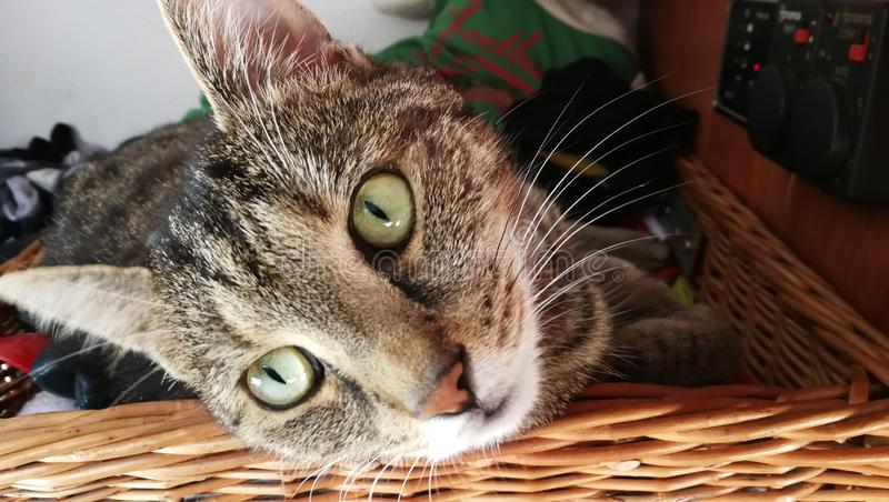 nette Katze - was Sie von mir wünschen lizenzfreies stockfoto