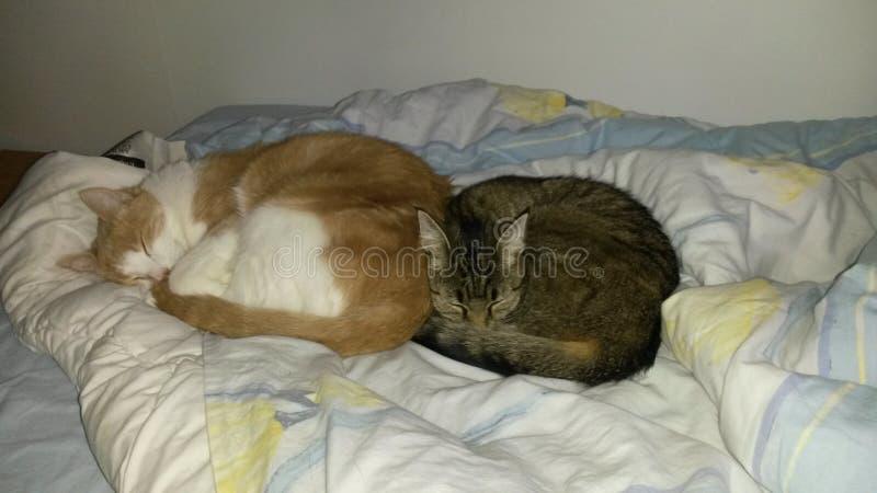 Nette Katzen lizenzfreie stockbilder