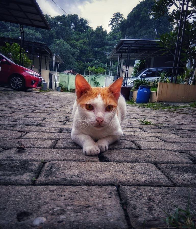 Nette Katzenhaltung, die aus den Grund aufpasst etwas sitzt lizenzfreies stockfoto