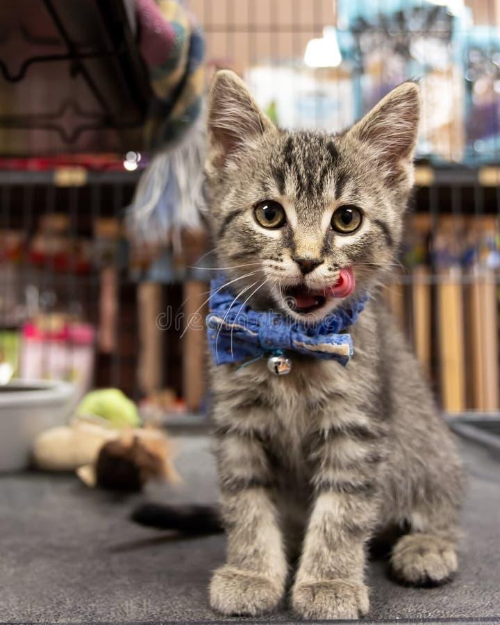 Nette Kitten Wearing eine Fliege und eine Warteannahme an einem Haustier lizenzfreies stockbild
