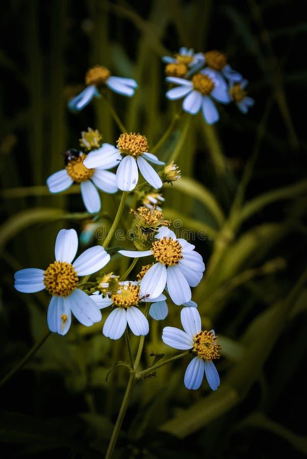 Nette kleine Blume auf dem Gebiet, Weinlesefarbe stockbilder