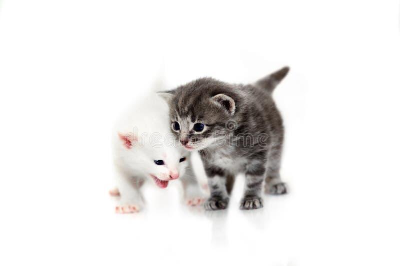 Nette kleine Kätzchen lokalisiert auf weißem Hintergrund stockbild
