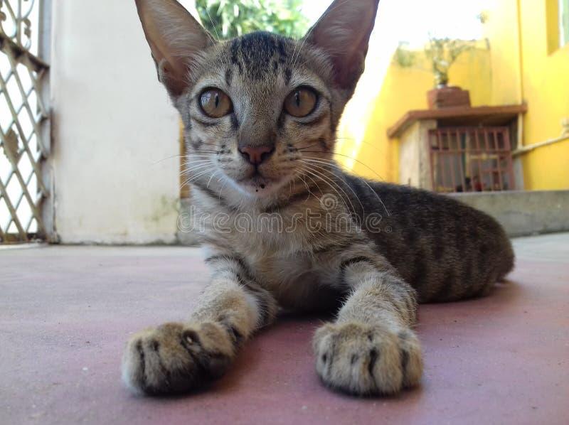 Nette kleine Katze stockbilder