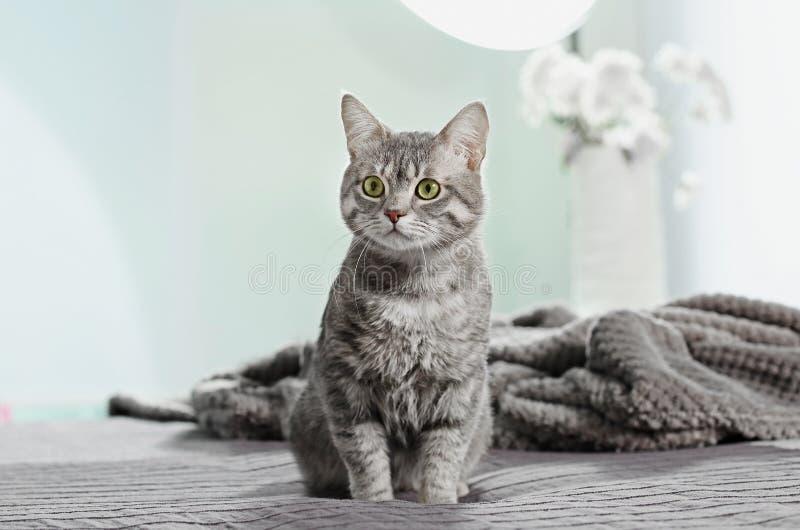 Nette lustige Katze auf Bett stockfotografie