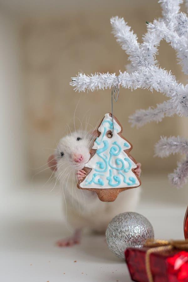 Nette lustige Ratte auf einem Hintergrund von Weihnachtsdekorationen stockbild