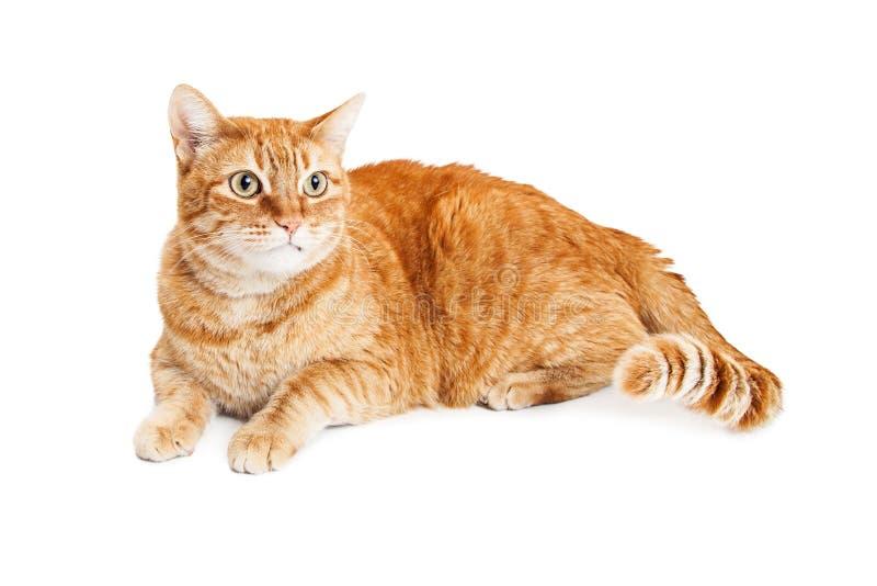 Nette orange Tabby Cat Laying Looking Side lizenzfreie stockfotos
