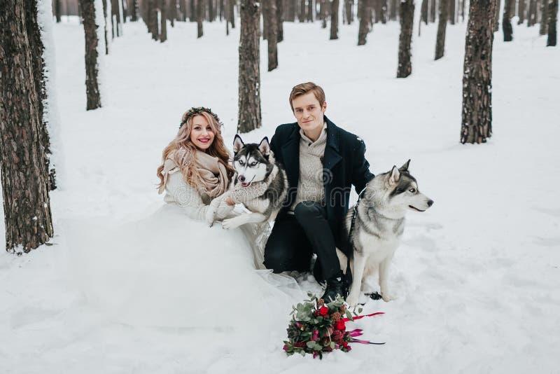 Nette Paare spielen mit sibirischem Husky in schneebedeckter Waldwinter-Hochzeit Grafik stockfotografie