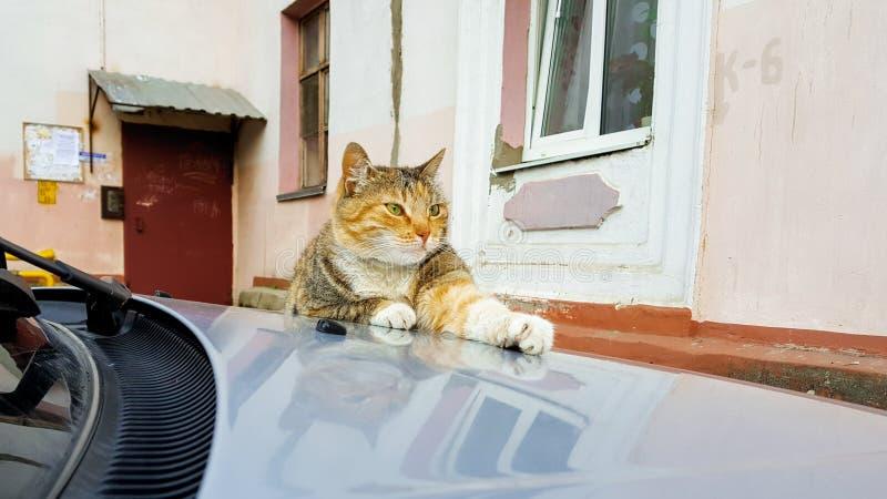 nette rote Katze, die auf der Haube des Autos im Yard alten Häusern liegt stockbild