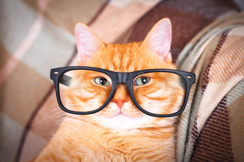 Nette rote Katze mit Glasnahaufnahme stockfoto