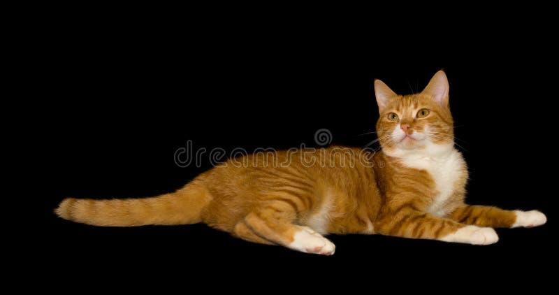 Nette rote Katze, schwarzer Hintergrund lizenzfreie stockbilder