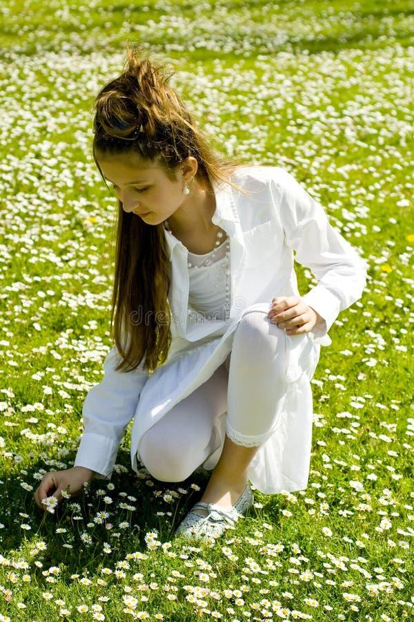 Nette Sammelnblumen des jungen Mädchens stockfotografie
