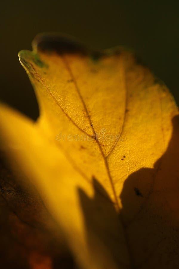 Nette Schatten auf einem gelben Blatt lizenzfreies stockfoto