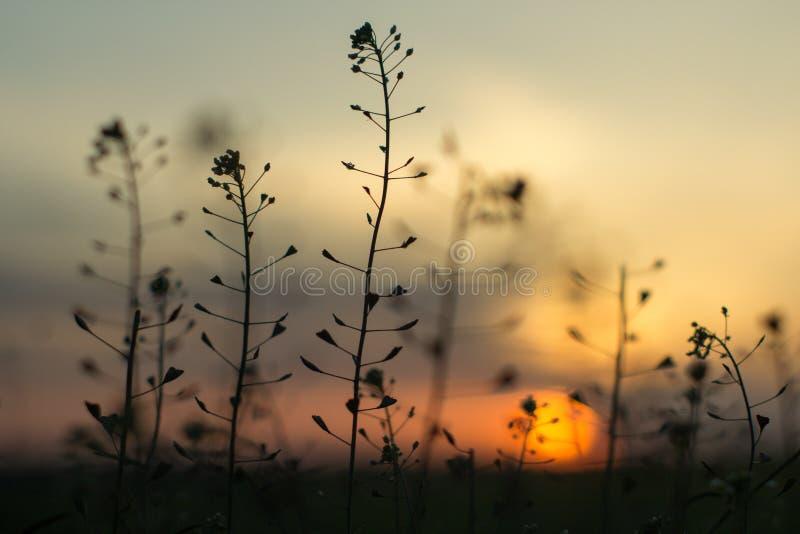 Nette schauende Anlagen mit Sonnenuntergang auf Hintergrund lizenzfreies stockfoto