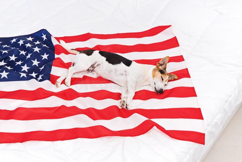 Nette schläfrige Hundelügen auf USA Vereinigte Staaten der amerikanischer Flagge lizenzfreie stockfotos