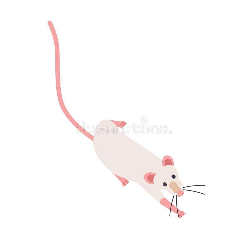 Nette schleichende fantastische Ratte Entzückendes domestiziertes Nagetier lokalisiert auf weißem Hintergrund Lustiges schleichen vektor abbildung