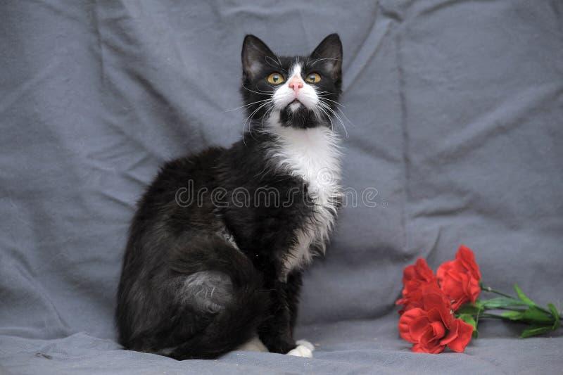 Nette schwarze Katze mit Weiß stockfoto