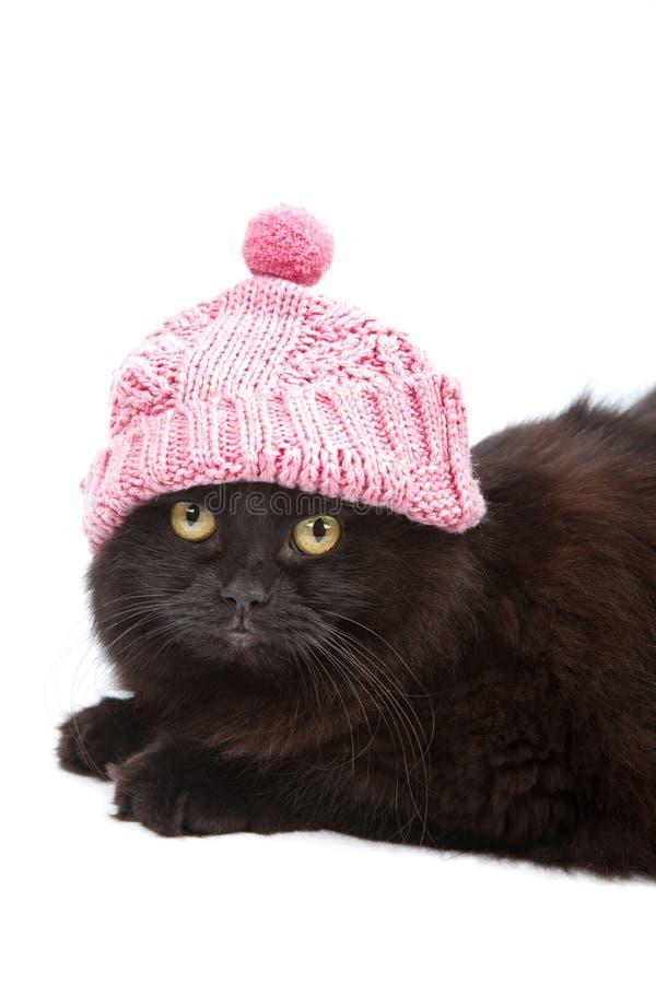 Nette schwarze Katze, welche die rosafarbene Schutzkappe getrennt trägt stockfotografie