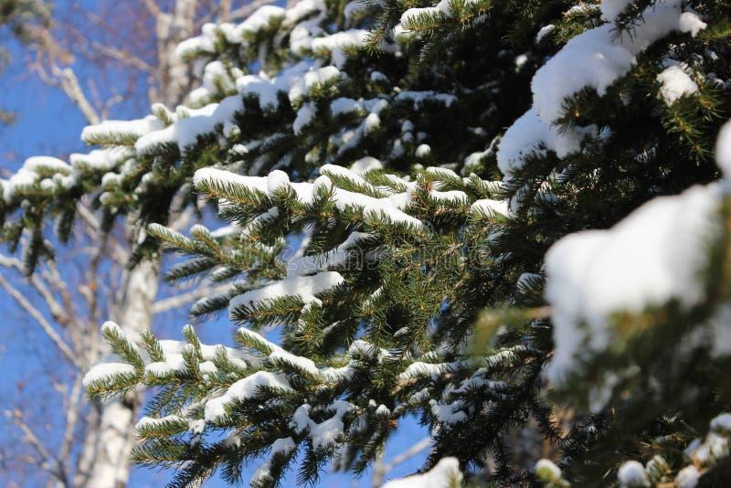 Nette takken in de winter royalty-vrije stock foto