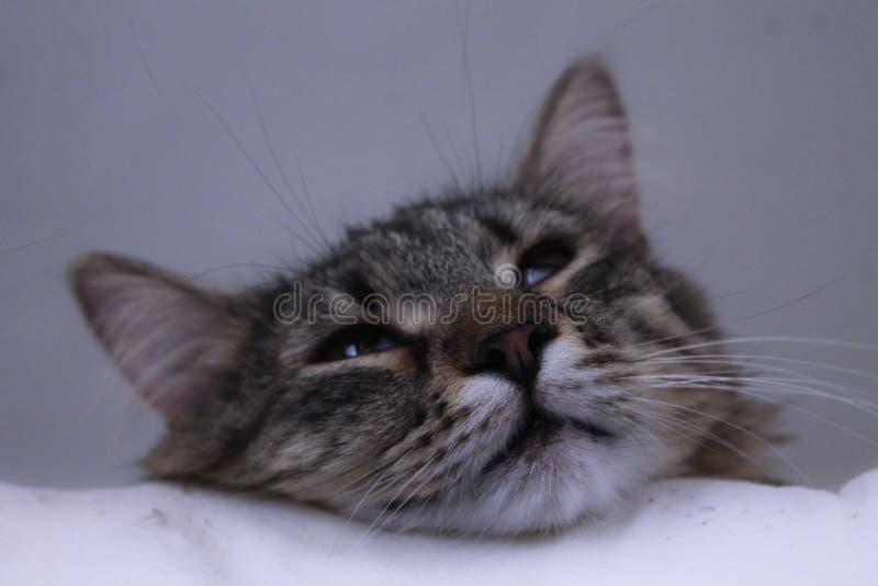 Nette Teufel-Katze lizenzfreies stockbild